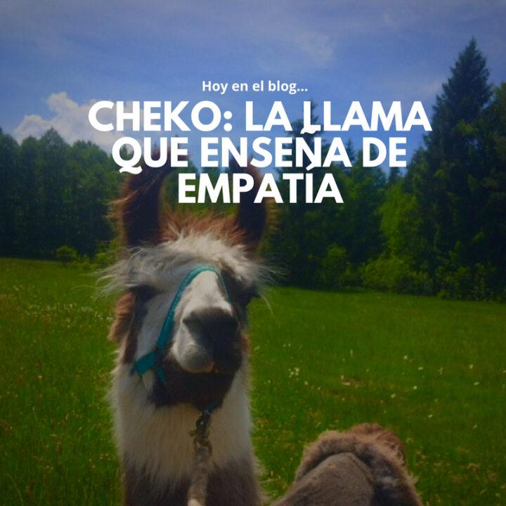 Cheko: la llama que enseña de Empatía